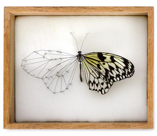 01-vlinderkast-01-0